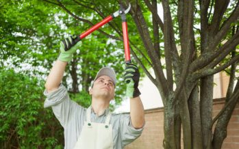 Trimming Your Trees